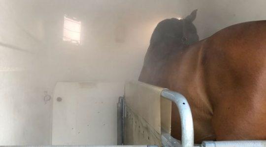 Soleinhalation für Pferde